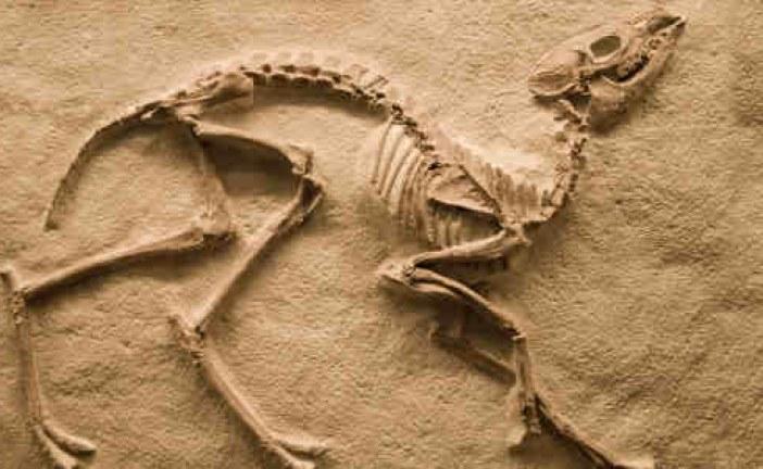 Fosil Keşif Atölyesi