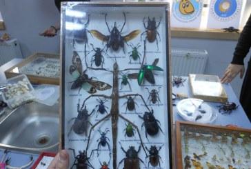 Ankara Çocuk Üniversitesi Böcek Şenlik Okulu